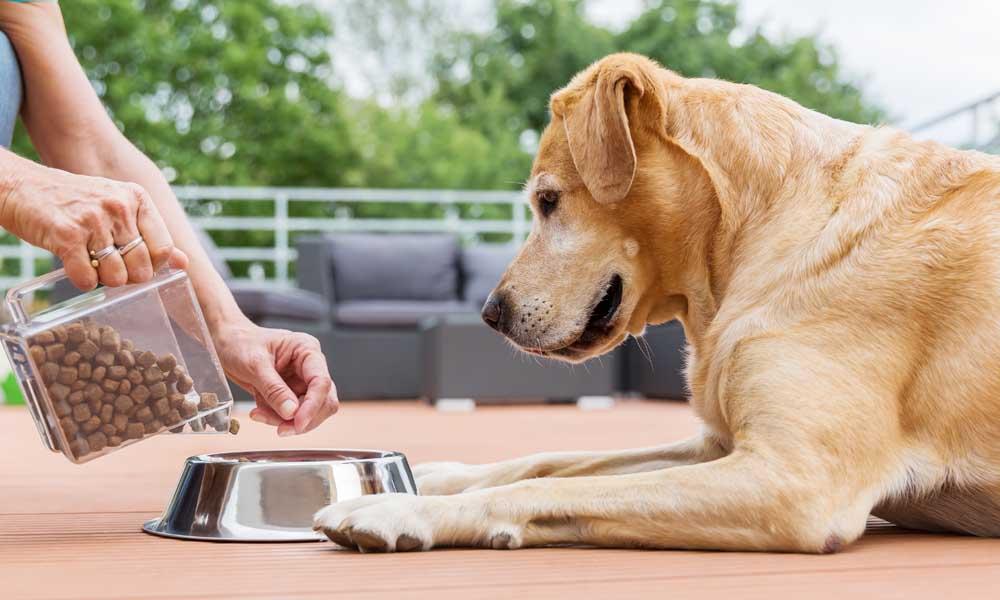 Сухой корм — идеальный вариант для собаки