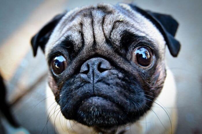 корм премиум класса для собак