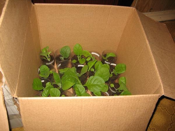 заказ перевозки растений