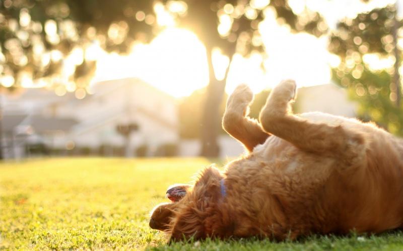 корм для кошек Грандорф