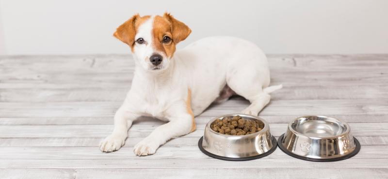 купить корм для собак Киев