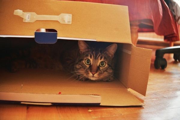 как перевезти квартиру