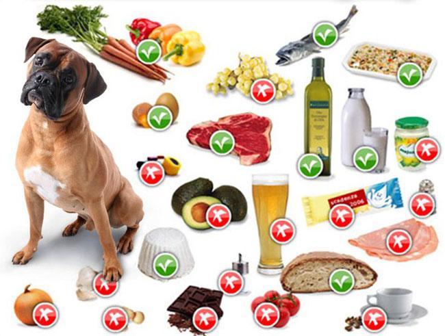 Правильная пища для собаки