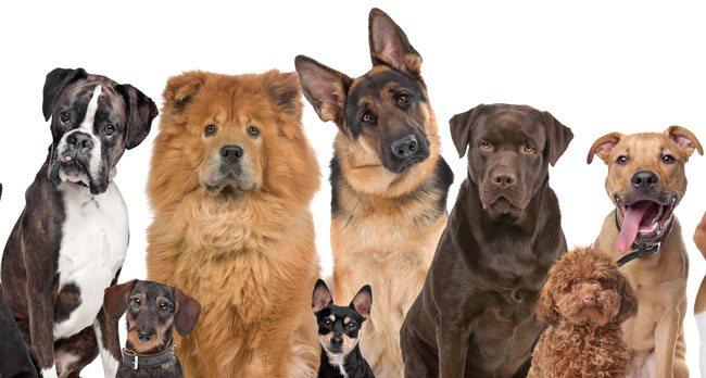 корма для собак холистик