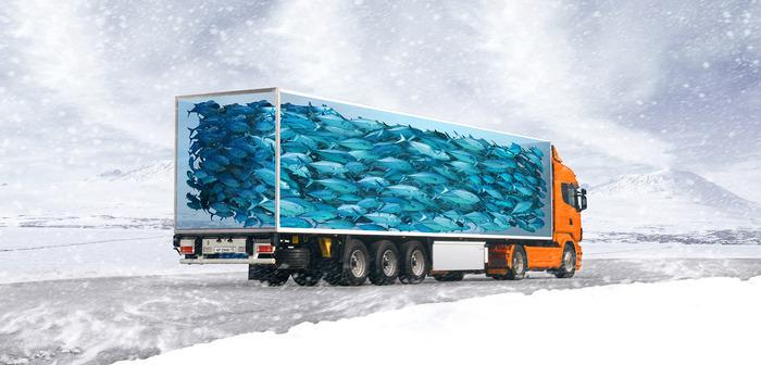 как перевезти мороженую рыбу