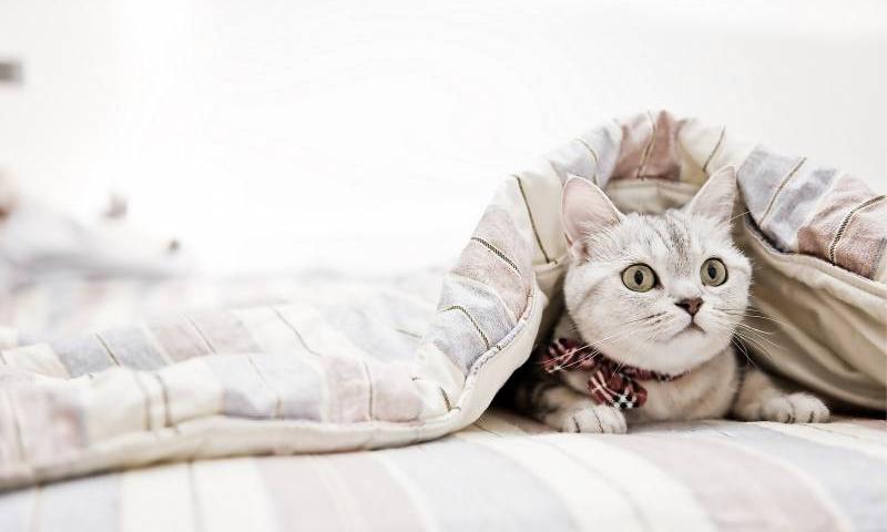 купить одеяло украинского производителя