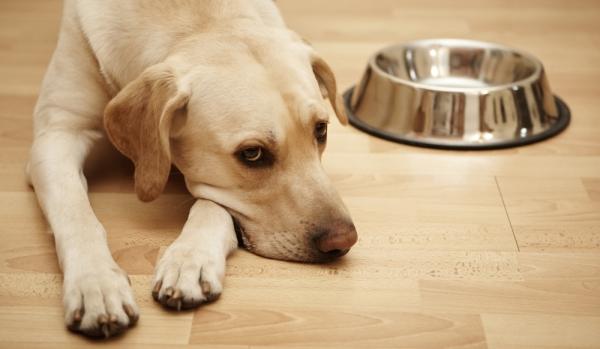 Правильное питание для собак