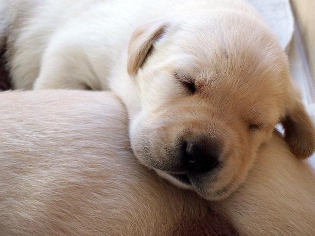 корм для собак цены