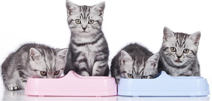 консервы для кошек Киев