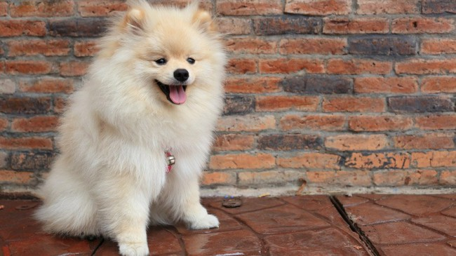 корма для собак Роял Канин