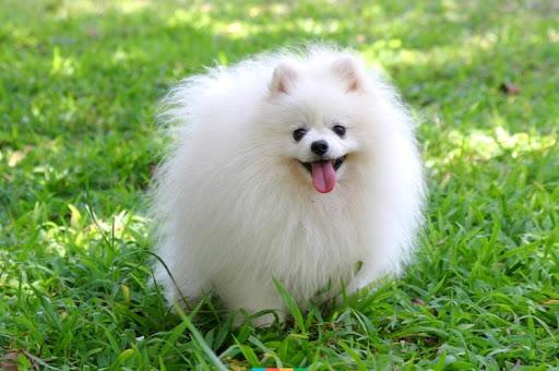 Роял Канин цена для собак