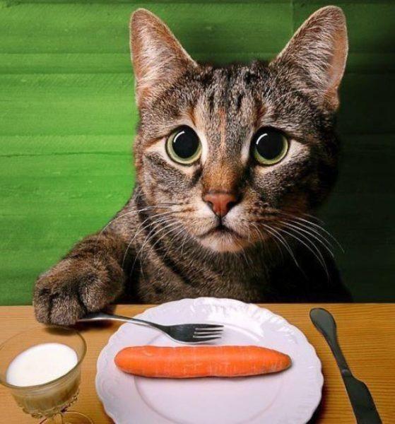 изменение рациона кошки