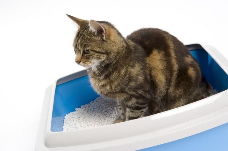 наполнитель для туалета кота