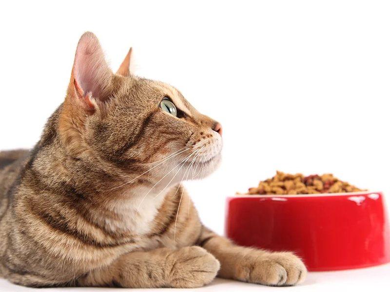 корма для кошек Грандорф
