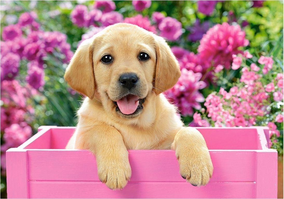 корма для собак холистики