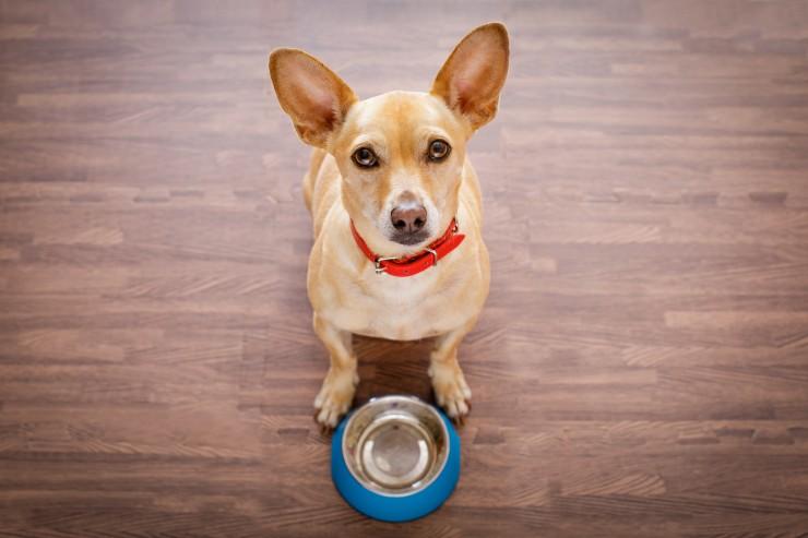 Нужно ли щенку столько же еды, сколько взрослой собаке
