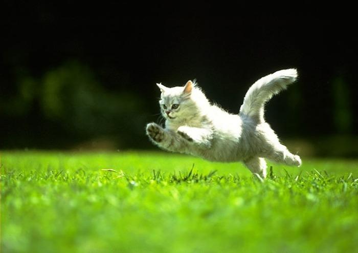 правильный корм — здоровый кот