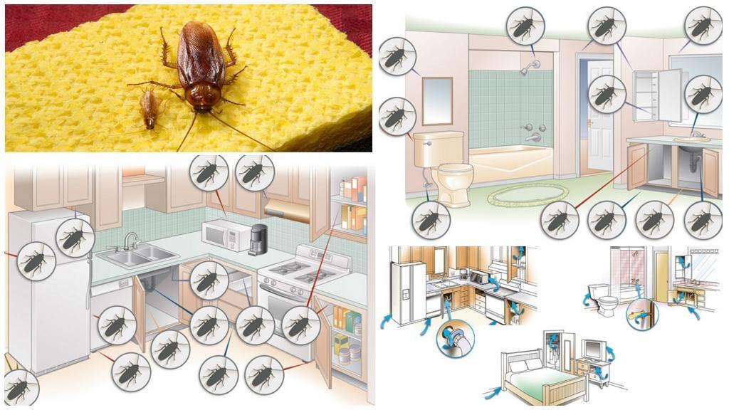 Где в квартире живут тараканы