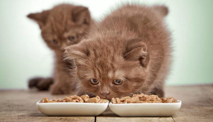 натуральный корм для котят