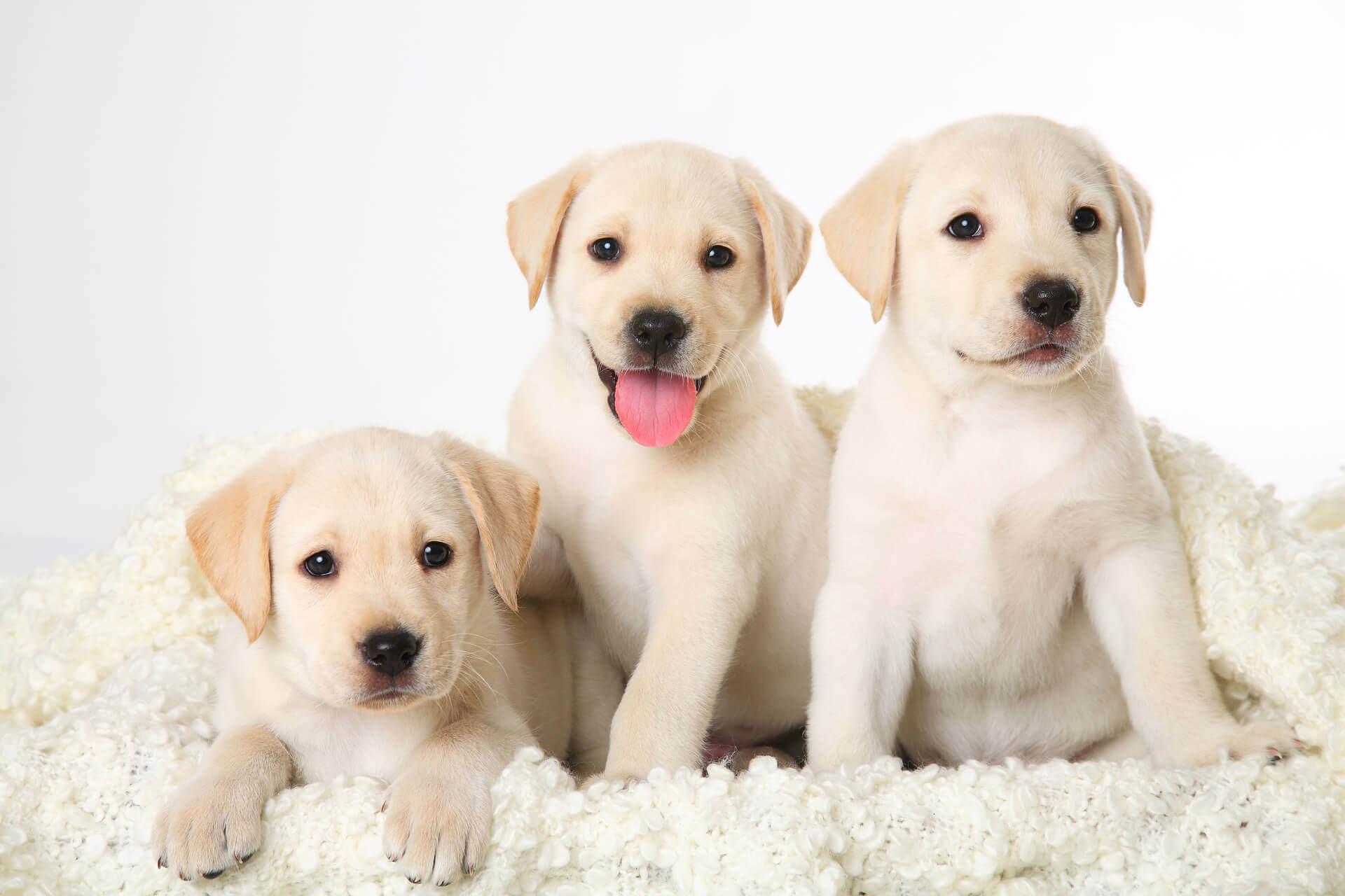 корм для собаки