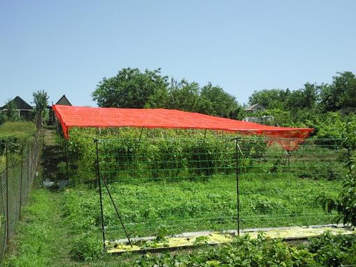 семена газонной травы купить Украина