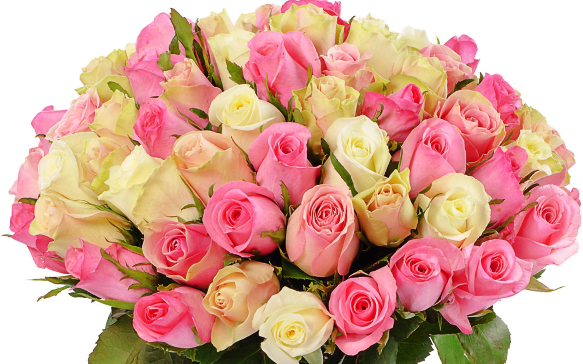 роза купить Харьков