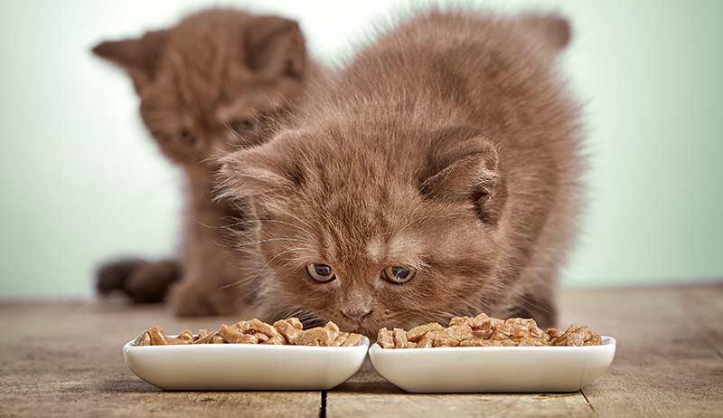 купить корм для кошек Грандорф
